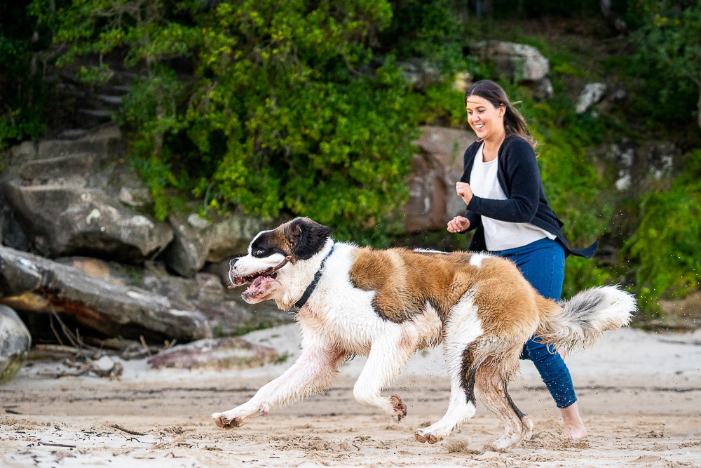 Dog-with-stick-running-with-human.jpg