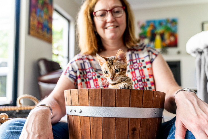 Baby-cat-portrait-in-Lane-Cove-Sydney