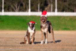Christmas Action Promo-0005.jpg