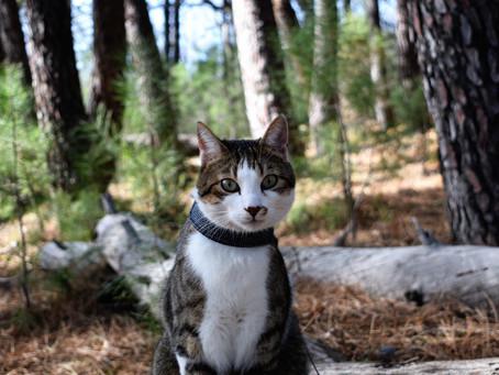 Cat Family Story #37: Osiris