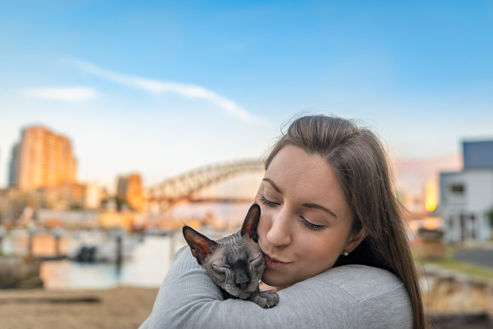 Sphynx-Naked-Cat-Sydney-Harbour-Bridge.j