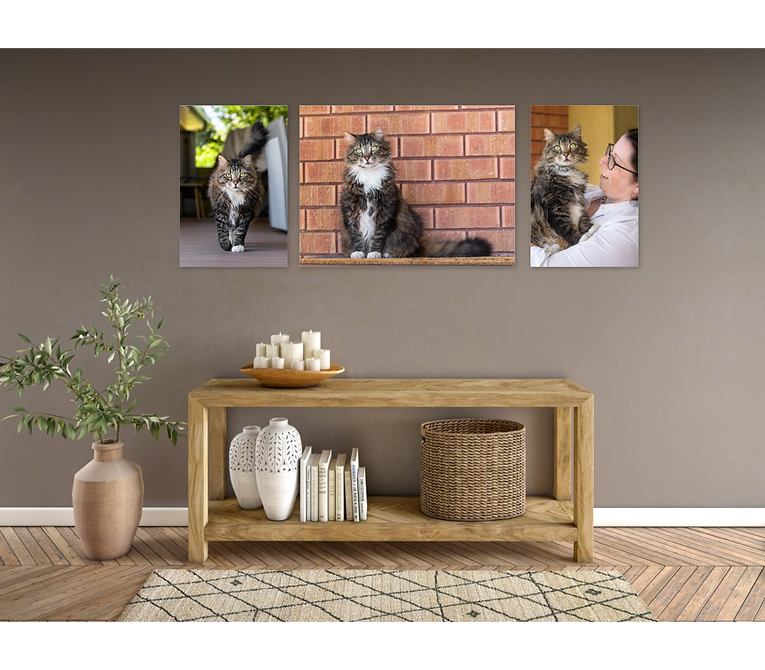 Wall art kate cat.png