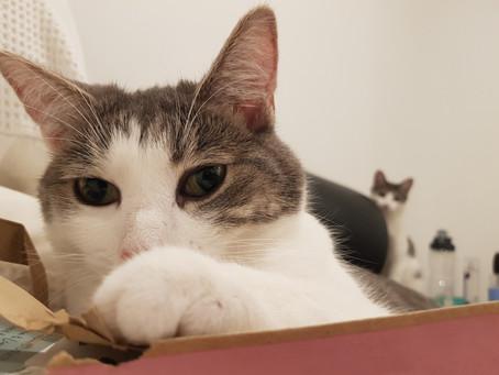 Cat Family Story #12: Eevee and Nala