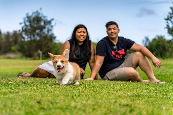 Family portrait of a happy couple with their corgi puppy enjoying time outdoors at Sydney Park