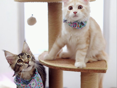 Cat Family Story #31: Maja and Freija