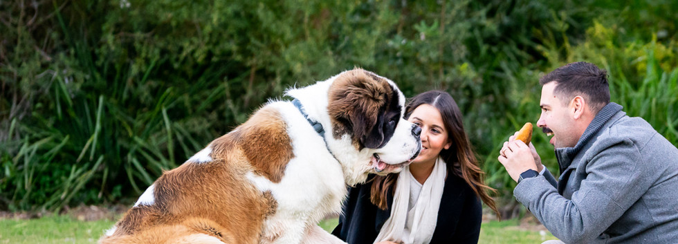 Family-portrait-with-Saint-Bernard
