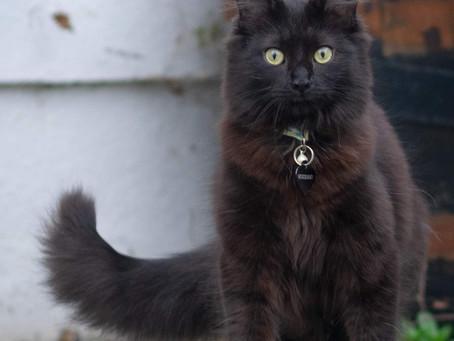 Cat Family Story #34: Sir Oscar, Tinsel, Purrsula van Cat, King George the Purr'd