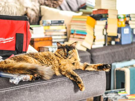 Cat Family Story #33: Ava