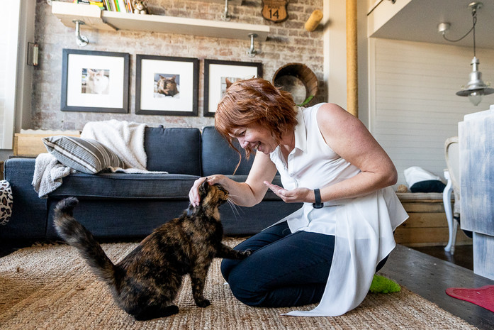 Cat-Indoor-Portrait-in-a-home-in-Sydney