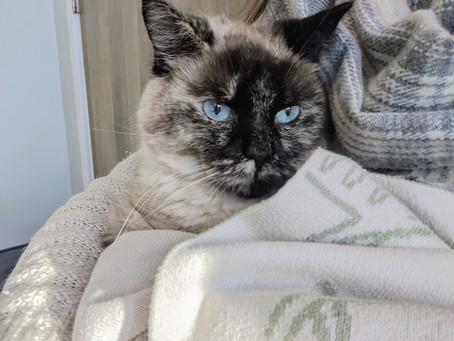 Cat Family Story #29: Nala
