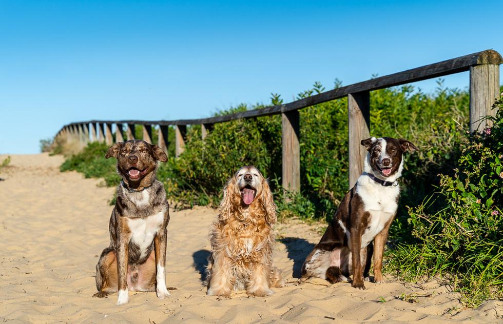 Portrait-of-three-dog-friends