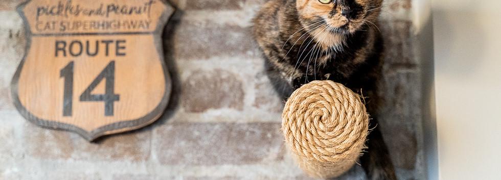 Cat-portrait-indoor-sydney.jpg
