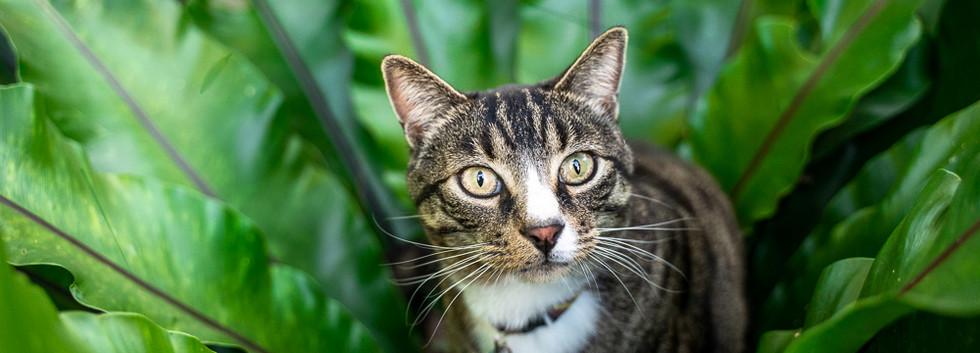 Photo-of-cat-in-a-fern