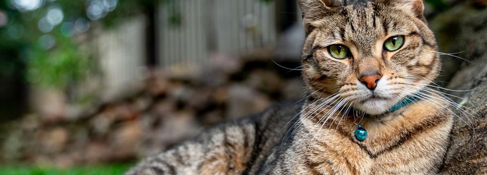 Cat-outdoors-relaxing-sun.jpg