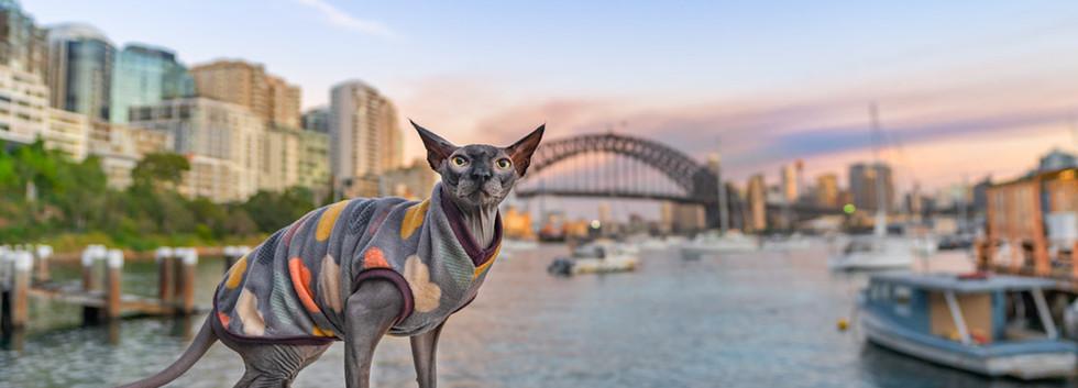 Sphynx-Sydney-Harbour-Bridge.jpg