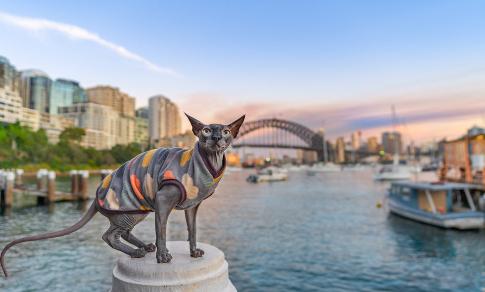 Sphynx-Sydney-Harbour-Bridge.jpg