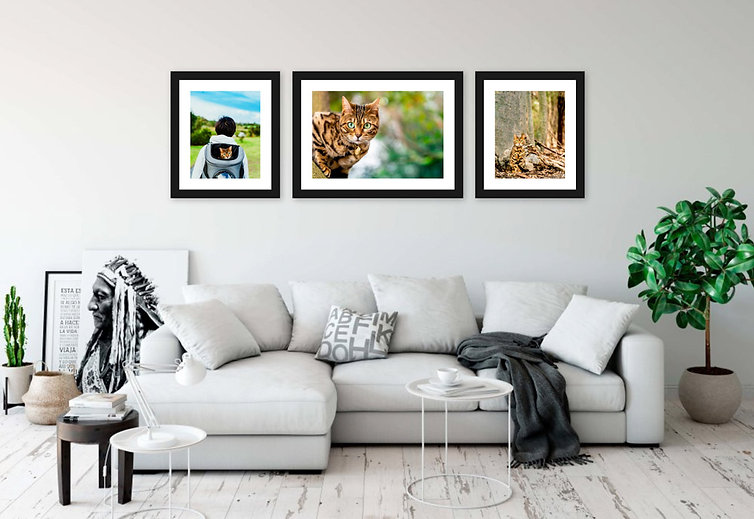Beautiful framed prints of cat displayed in modern Sydney living room