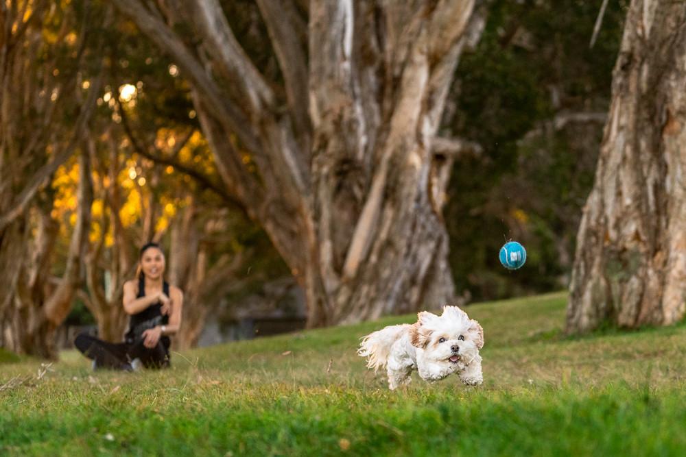 Dog-chasing-ball-Sydney