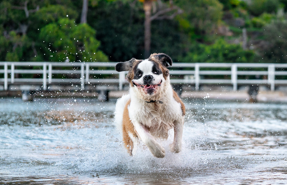 Dog-playing-in-water-at-the-beach