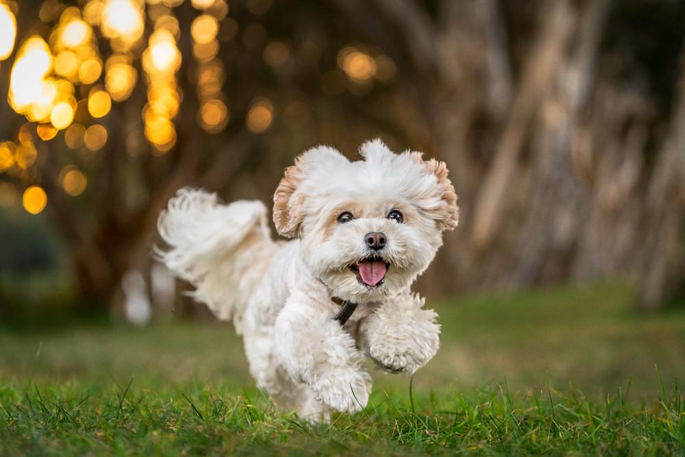 Portrait-of-dog-running