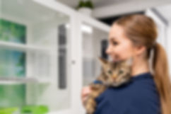A photo of a vet nurse holding a cat at the cattery in Gladesville Veterinary Hospital.