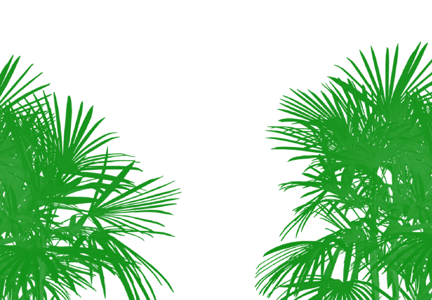 aqi-palms.png