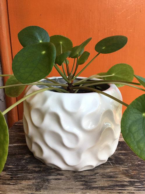 Slipcast Porcelain Vessel/Planter   Emilia Krankowska