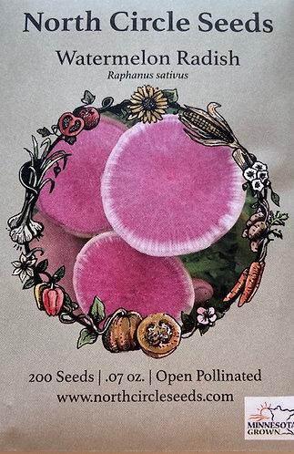 Watermelon Radish - Raphanus sativus