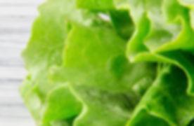 lettuce shutterstock.jpg