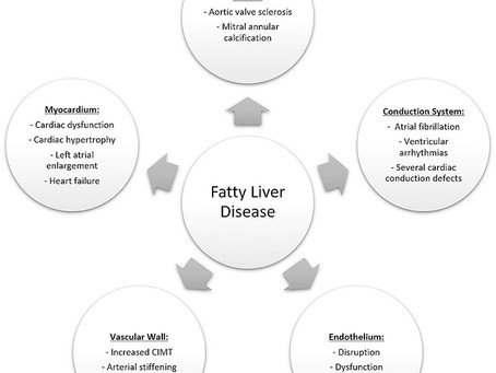 Fatty Liver and its link to Heart Disease