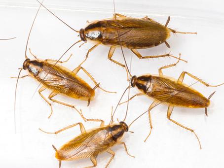 مشاكل و مكافحه الصراصير في المنازل