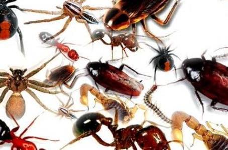 الحشرات المنزلية وطرق التخلص منها