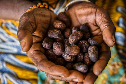 an african woman shows shea seeds.jpg