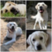 PicsArt_04-23-05.01.36 (1).jpg