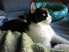 A black and white cat with yellow eyes lying on a green blanket.