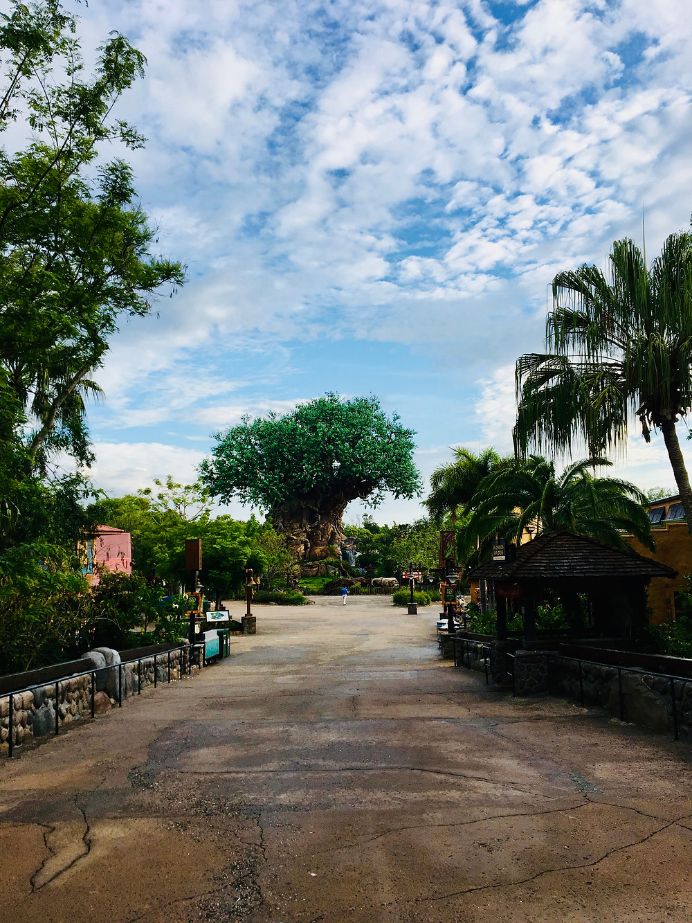 A complete empty Animal Kingdom at Rope Drop, view of the Tree of Life at Disney World
