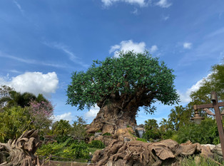 5 Things to Know About Visiting Disney World Right Now