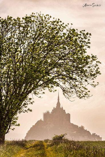 L'arbre du Mont Saint-Michel