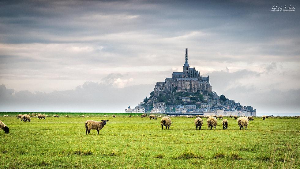 L'agneau de prés-salés du Mont-Saint-Michel