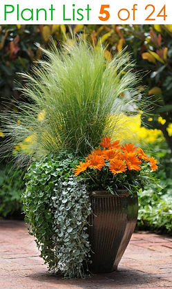container-garden-plants-planter-pot-idea