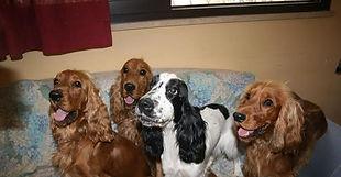 Soluzione casa a  Zampa5stelle Dog Hotel | Pensione per cani Palermo