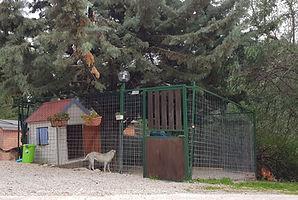 Soluzione Villetta a Zampa5stelle Dog Hotel | Pensione per cani Palermo