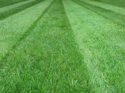 Kitchener Waterloo Lawn cutting,