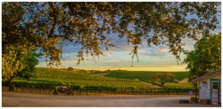 North County wine Country