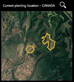 Tree plantation plots
