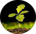 Tree Sapling.jpg