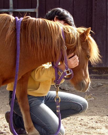 miniture horse, horse massage, massage