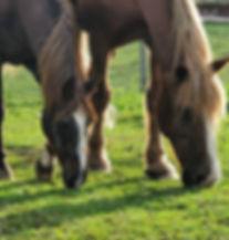 horseheads_edited.jpg