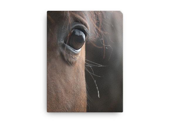 12x16 Equine Eye