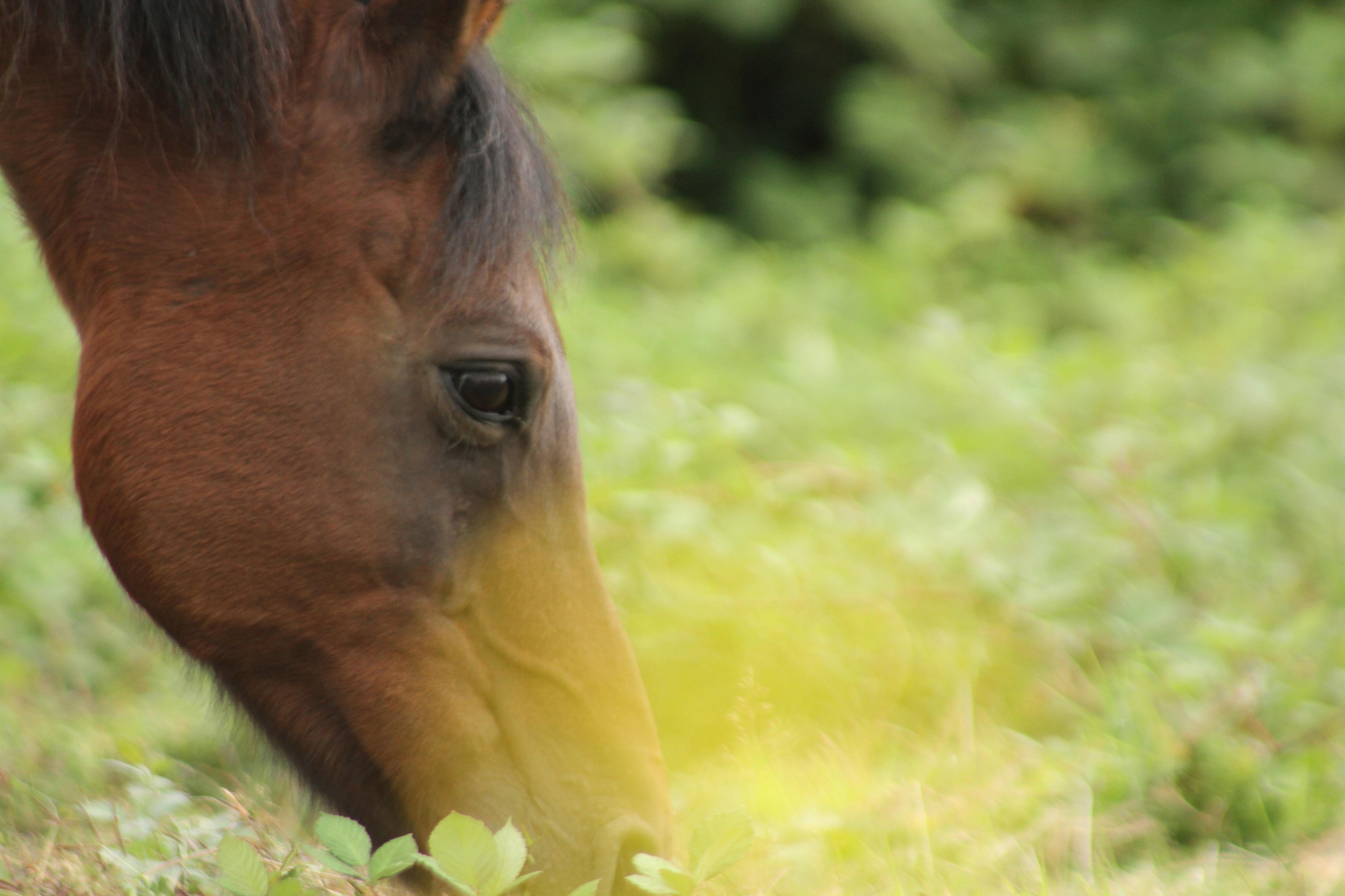horseinyellow